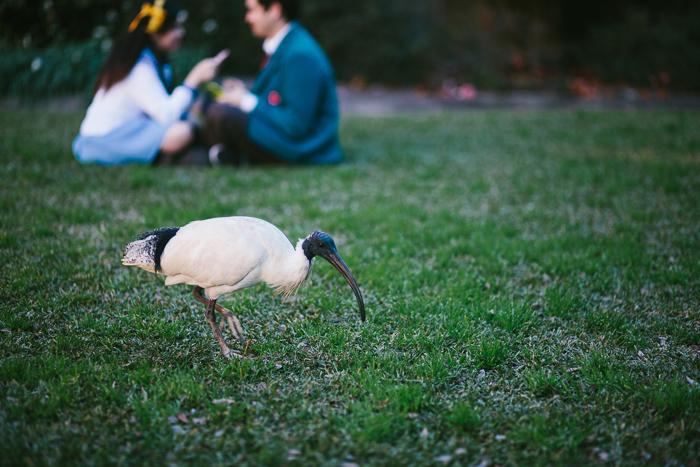 sydney-university-ibis