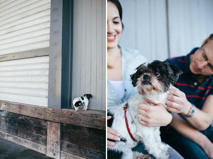 pet-engagement-photos-dog