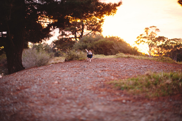 banshee-pet-photography-sunrise
