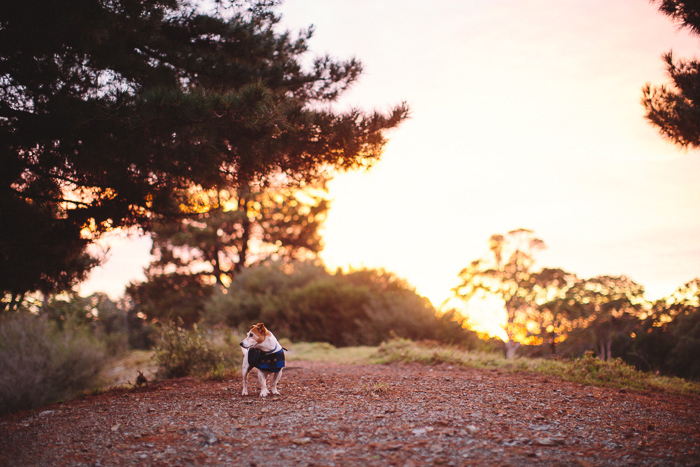 sunrise-pet-photographer