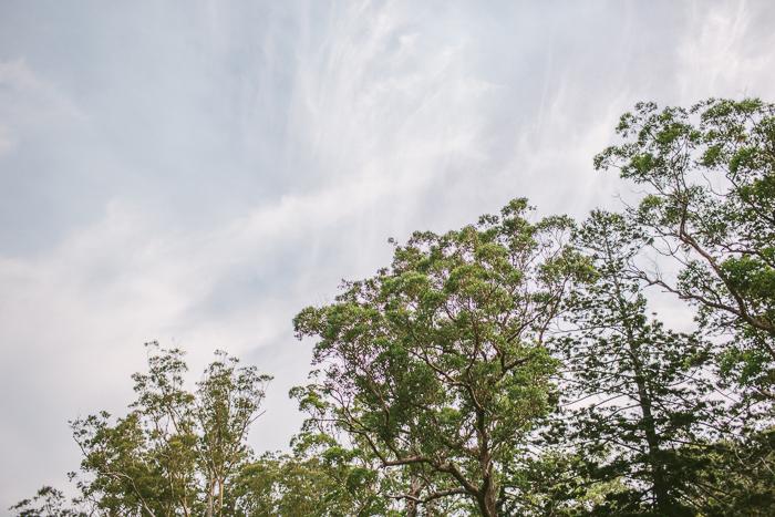 royal-national-park-trees