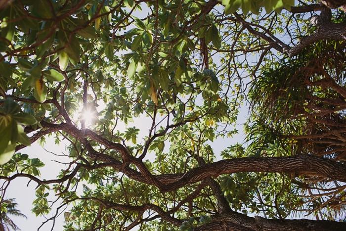 Trees at the Warwick Resort and Spa