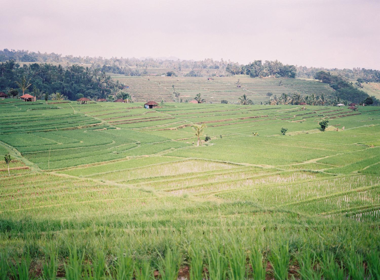 jatiluwih bali rice terraces