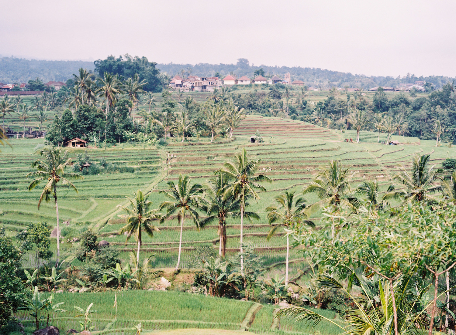 bali wedding photographer for rice terrace wedding