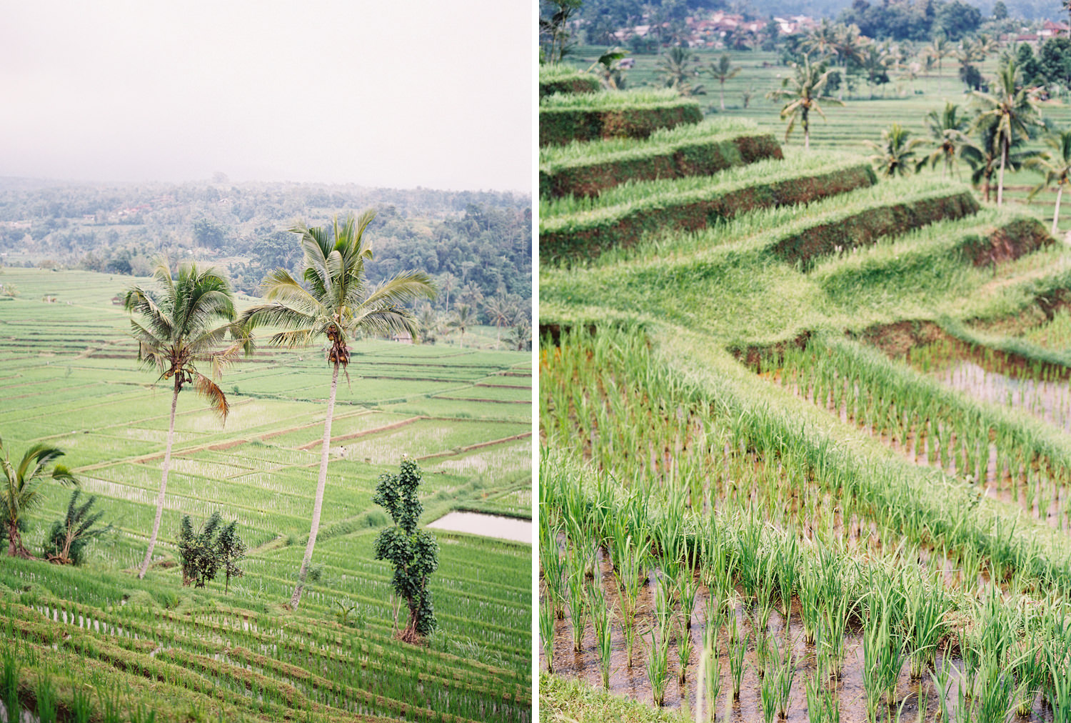 balinese rice terraces in the jatiluwih area