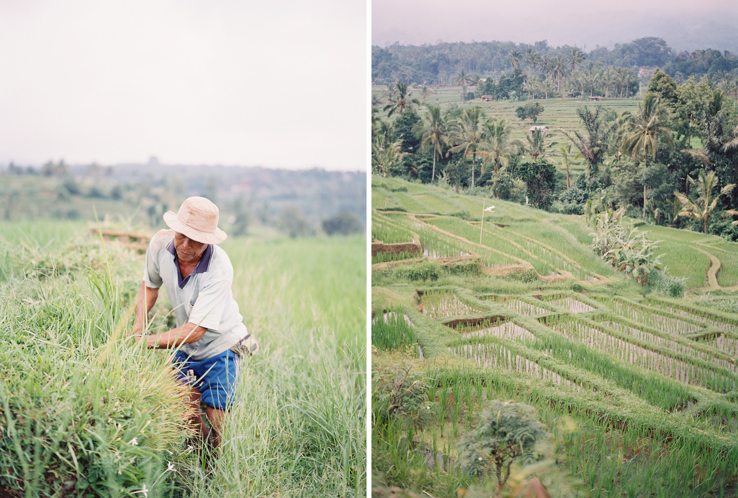 traditional bali rice terrace wedding