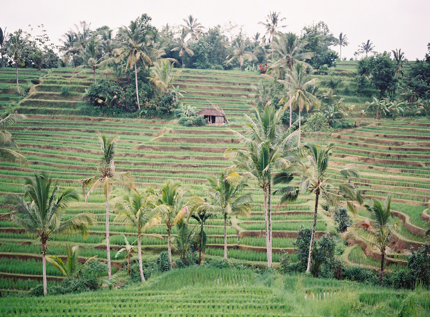 beautiful landscapes in bali for wedding