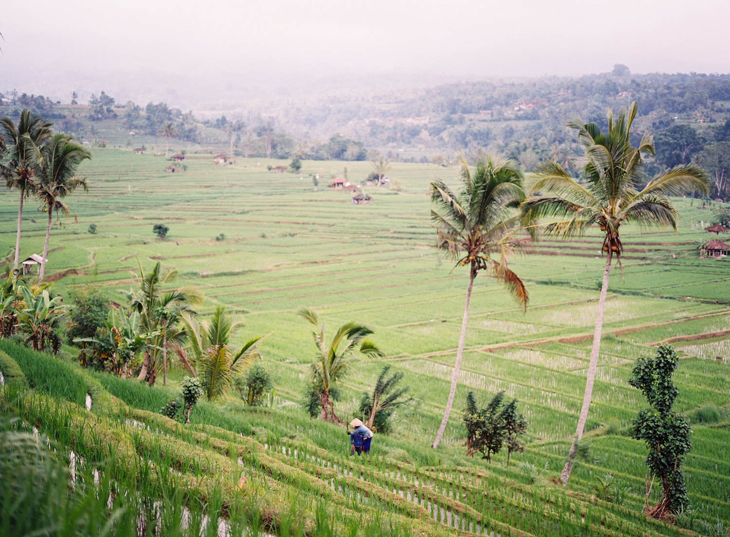 ubud engagement and wedding photography