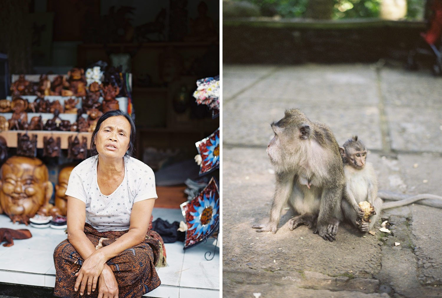 ubud monkey forest photography