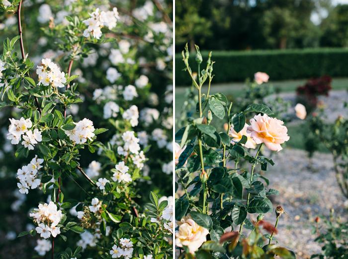 rose-garden-at-yaralla-estate