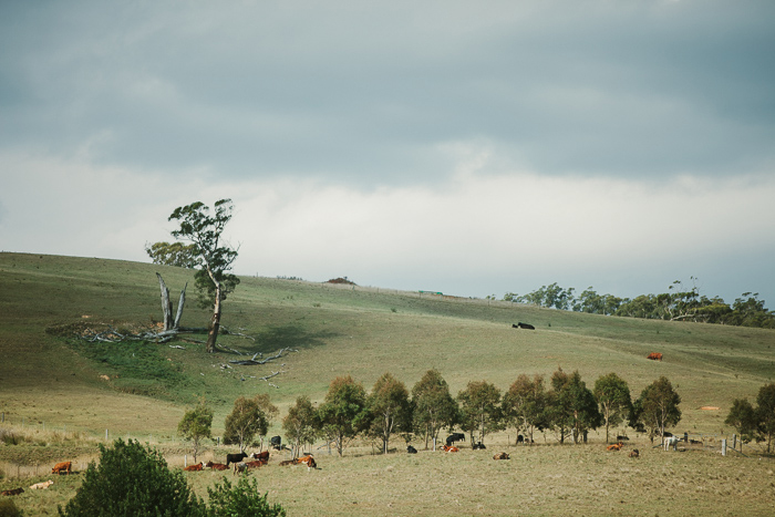 bendooley estate berrima landscapes