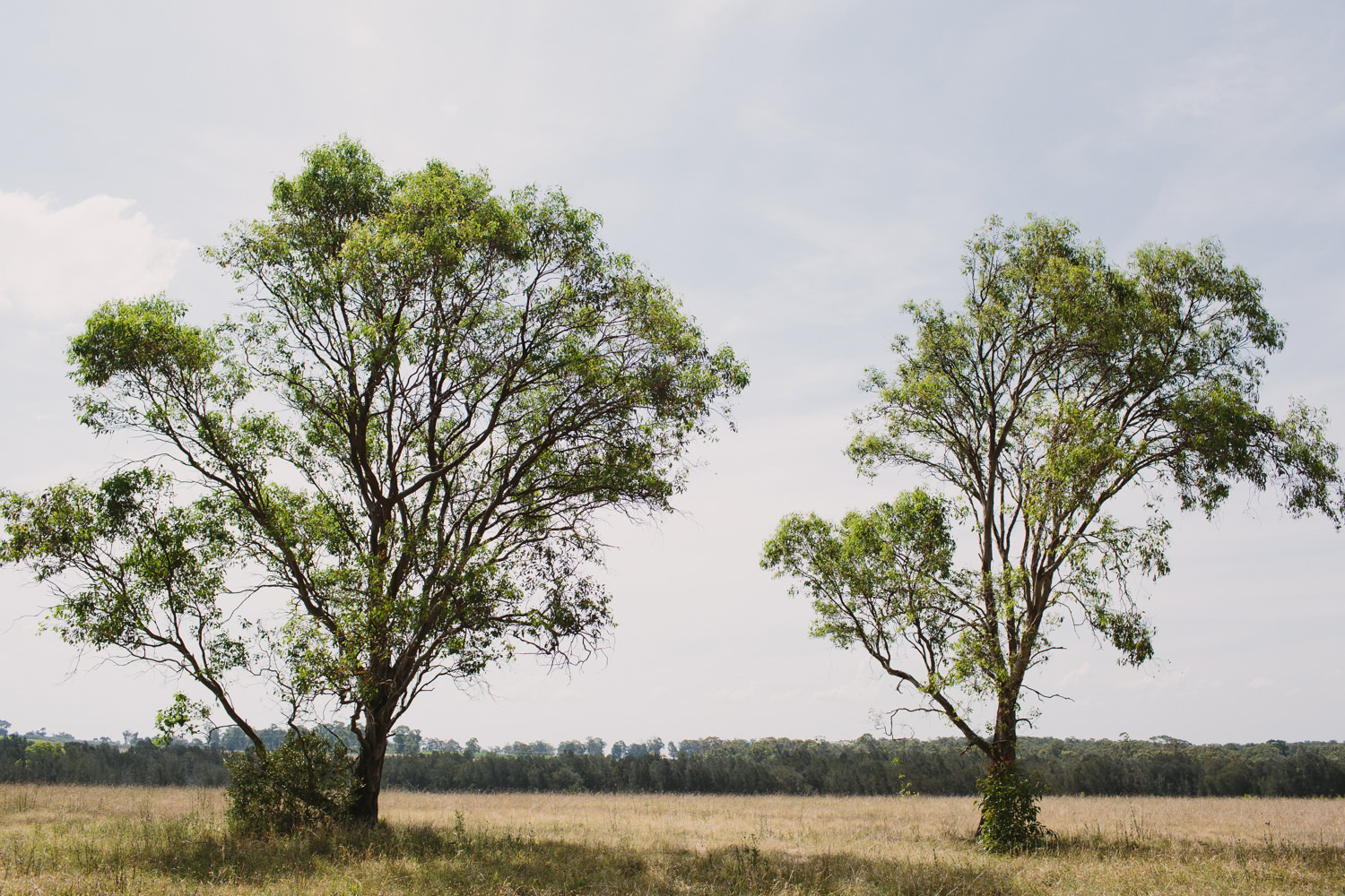 Hunter Valley Trees For Wedding Ceremony