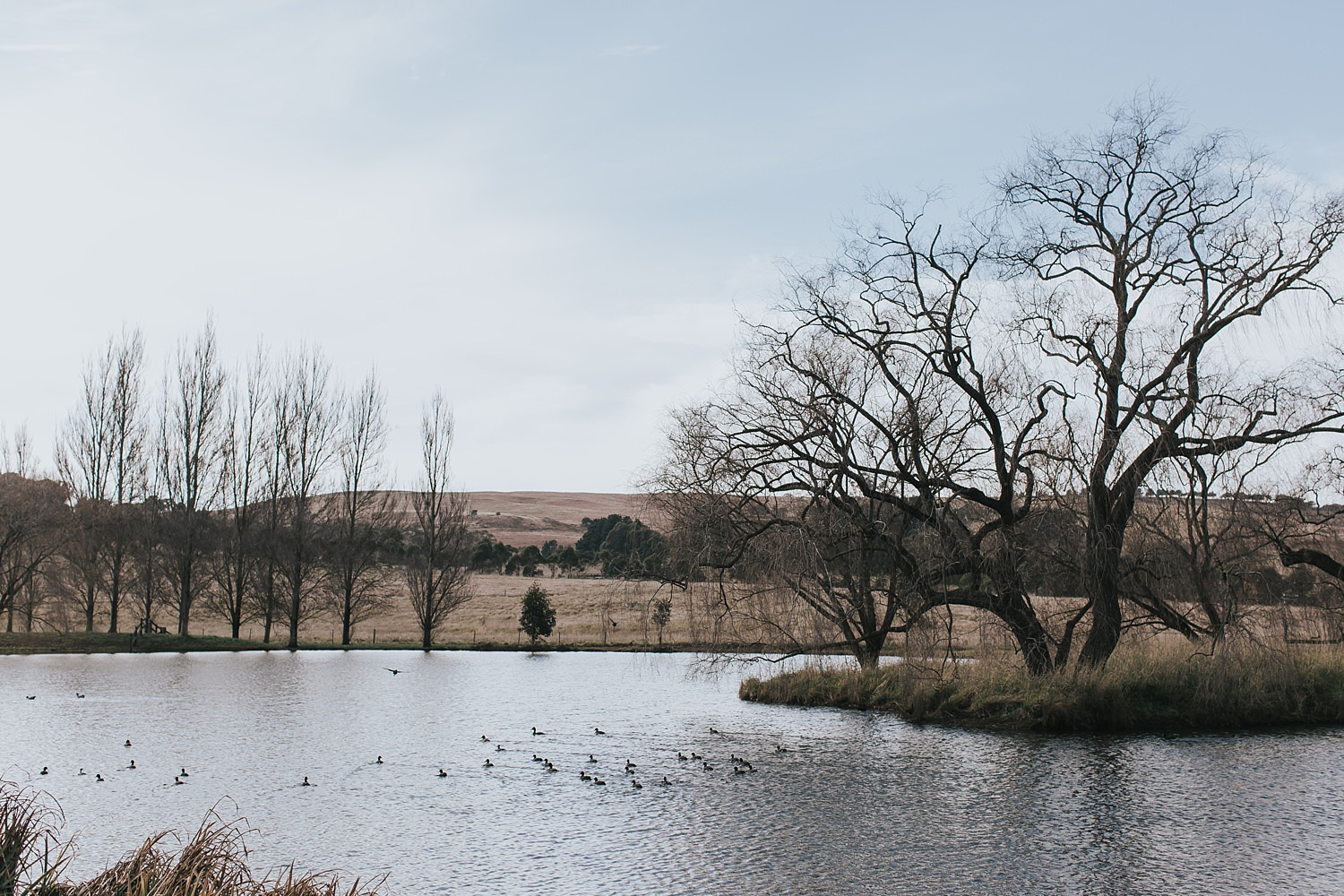 the lake at bendooley estate for wedding days